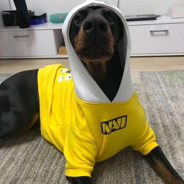 Hoodie Pet To Win